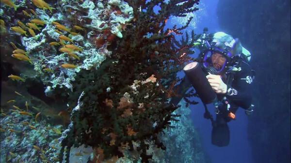 世界・七つの海の物語 ~神秘の生き物たち~ (吹) 魅惑の青き海・インド洋沿岸
