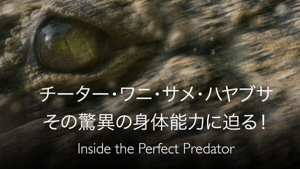 チーター・ワニ・サメ・ハヤブサ その驚異の身体能力に迫る! (吹) チーター・ワニ・サメ・ハヤブサ その驚異の身体能力に迫る!