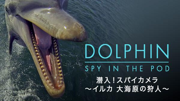 潜入! スパイカメラ 〜イルカ 大海原の狩人〜 (字) 第1話