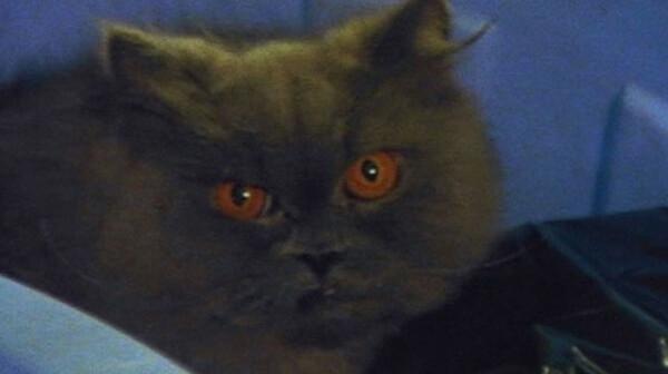 探偵物語 黒猫に罠を張れ