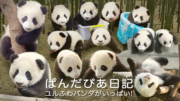 ぱんだぴあ日記 ユルふわパンダがいっぱい! 第53話 2016/8/13 ライブ2
